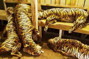 tigrarna